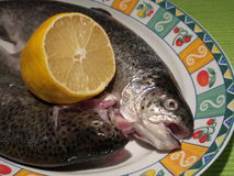 Raw trouts on a plate ready to cook. Two raw trouts on a plate with half lemon, ready for cooking Royalty Free Stock Photography