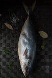 Raw tuna fish Royalty Free Stock Photo