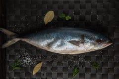 Raw tuna fish Stock Images