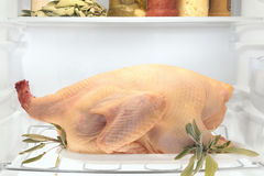 Raw turkey royalty free stock image