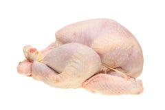 Raw turkey Stock Photography
