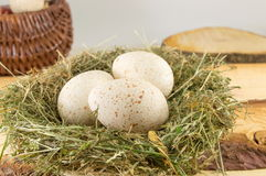 Raw turkey eggs in a nest Stock Image