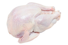 Raw turkey. Isolated Royalty Free Stock Image