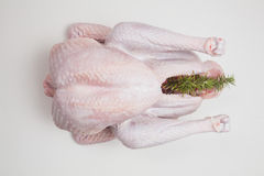 Raw turkey, Thanksgiving, Christmas dinner, preparation Stock Images