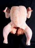Raw uncooked chicken on black. Raw uncooked chicken on a black background royalty free stock photo