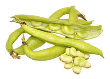 Raw Uncooked Fresh Broad Beans Stock Photos