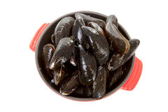 Raw uncooked mussels Royalty Free Stock Images