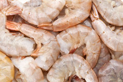 Raw uncooked shrimps Stock Images