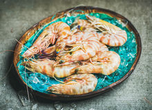 Raw uncooked tiger prawns on chipped ice, concrete background Royalty Free Stock Photo