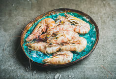 Raw uncooked tiger prawns on chipped ice, fresh seafood Stock Images