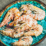 Raw uncooked tiger prawns on chipped ice, fresh seafood Stock Image