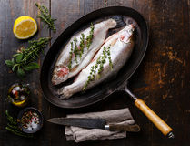 Raw uncooked Trout fish with spices and herbs Stock Photos