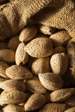 Raw Unshelled Organic Almonds Royalty Free Stock Image