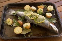 Raw Vegetables And Trout Stock Photography