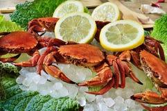 Raw velvet crabs Royalty Free Stock Photos