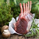 Raw venison rack Stock Image
