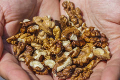 Raw walnuts Royalty Free Stock Photography