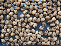 Raw Walnuts Stock Photo