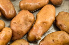 Raw washed potatoes closeup Stock Photo