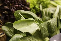 Raw and wet spinach leaves. Green vegetable detail, healthy food, diet Royalty Free Stock Image