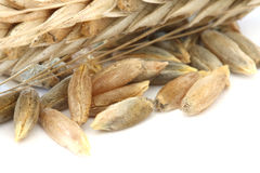 Raw wheat corns Royalty Free Stock Photo