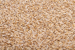 Raw wheat grains Royalty Free Stock Photos