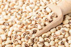 Raw white cow pea Royalty Free Stock Image