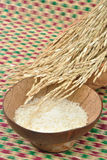 Raw white jasmine rice with paddy rice Stock Images