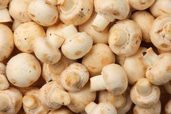 Raw white mushrooms (Agaricus bisporus). Edible raw white mushrooms (Agaricus bisporus Royalty Free Stock Photography