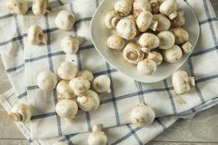 Raw White Organic Baby Button Mushrooms. Ready to Cook Royalty Free Stock Photography