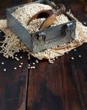 Raw White Sorghum grain. In a metal box on a dark wooden table Stock Photos