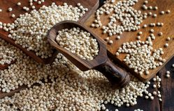 Raw White Sorghum grain Royalty Free Stock Photography