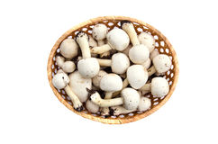 Raw white wild mushrooms champignons Agaricus in basket Stock Photography