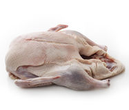 Raw Whole Duck Royalty Free Stock Photo
