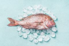 Raw whole fish on light turquoise background with ice cubes, top view. Seafood concept. Pink dorado stock photos
