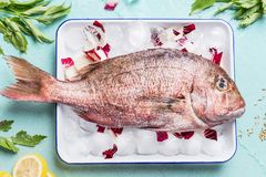 Raw whole fish in tray with ice cubes on light turquoise background with heabs and spices, top view. Seafood concept. stock photos