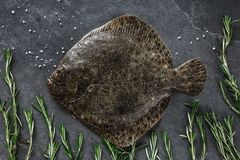 Raw whole flounder fish with rosemary on dark stone background. Creative layout made of fish, top view stock photography