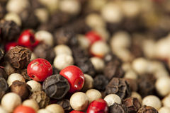 Raw Whole Four Peppercorn Blend Royalty Free Stock Photos