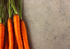 Raw whole fresh carrots on gray background. royalty free stock photo