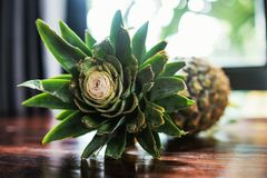 Raw whole pineapple on wooden brown surface table at room of hotel. Fresh and delicious fruit diet Stock Image