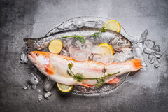 Raw whole trout fish and Gold Rainbow trout on dish in dish with  ice cubes and fresh cooking ingredients on dark rustic backgroun Royalty Free Stock Photography