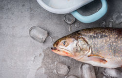 Raw whole trout head with ice cubes on concrete stone background, top view, place for text. Seafood concept stock photography