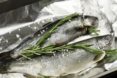 Raw whole trouts with fresh herbs and sea salt. Seafood concept stock photography