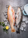 Raw whole trouts with ice cubes on concrete stone background. Royalty Free Stock Photos