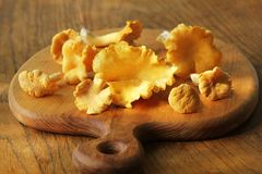 Raw Wild Chanterelle Mushrooms Redy For Cooking. Composition With Wild Mushrooms, Herbs, Onion Royalty Free Stock Image