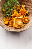 Raw wild mushrooms chanterelle Royalty Free Stock Image