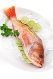 Raw Wild Rockfish Stock Photography