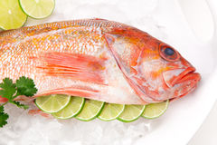 Raw Wild Rockfish Stock Image