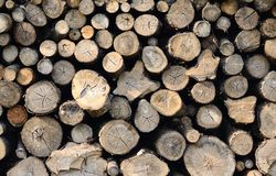 Raw wood logs in a lumber staging Royalty Free Stock Photography