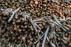 Raw wood logs in a lumber staging Royalty Free Stock Images